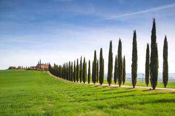 A Farmhouse near San Quirico d'Orcia with green hills and cypresses.