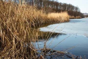Dry reed by the frozen lake. Beautiful sunny winter day.