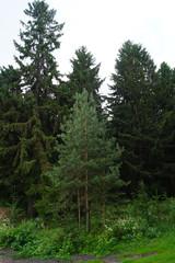 forest in the Republic of Mari El