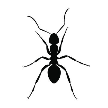 Black sign ant silhouette. Ant silhouette close up isolated on white background. Vector illustration