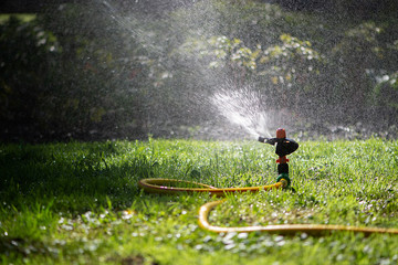 Automatic sprinkler system watering the lawn.Watering in the garden. Watering garden plants. Jet of water from a hose - soft focus