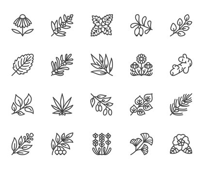 Medical herbs flat line icons. Medicinal plants echinacea, melissa, eucalyptus, goji berry, basil, ginger root, thyme, chamomile. Thin signs for herbal medicine. Pixel perfect 64x64 Editable Strokes