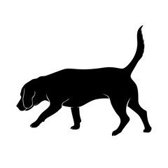 The dog is sniffing. The dog is Beagle breed is hear smell. Silhouette. Vector illustration.