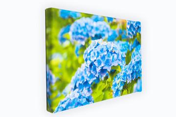 Obraz na płótnie, kwiaty
