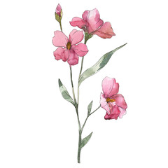 Pink flax floral botanical flower. Watercolor background set. Isolated flax illustration element.