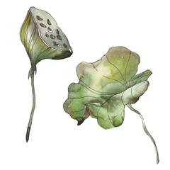 Lotus foral botanical flower. Watercolor background illustration set. Isolated lotus illustration element.