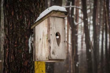 bird feeder in winter on a pine tree