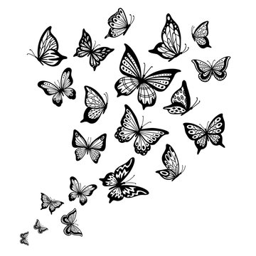 Butterflies flow. Butterfly wing, spring flying insect and flight wave vector background illustration