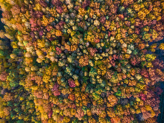 Aerial view of autumn texture colored forest. Drone shot bird eye. Natural pattern in top down aerial view over the forest. green and yellow, treetops at sunset, copy space