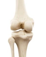 Illustration of human knee bones