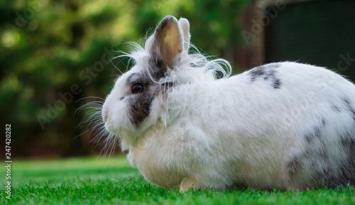 Kaninchen Im Garten Auf Dem Rasen Stock Photo And Royalty Free