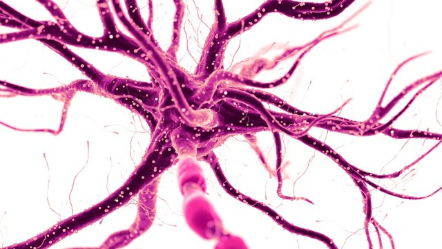 Illustration of a human nerve cell