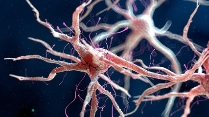 Close up of human nervous cell