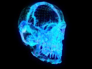 Illustration of a plexus skull