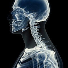 Illustration of the cervical spine