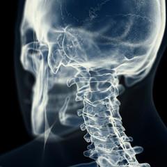 Illustration of the cervical spine