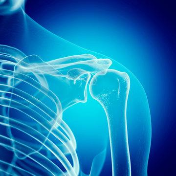Illustration of the shoulder joint