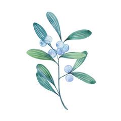 watercolor mistletoe twig