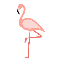 Flamingo in flat.style. Vector illustration isolated on white