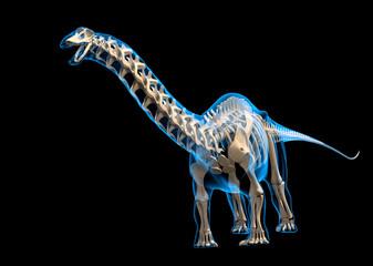 Brontosaurus skeleton, illustration