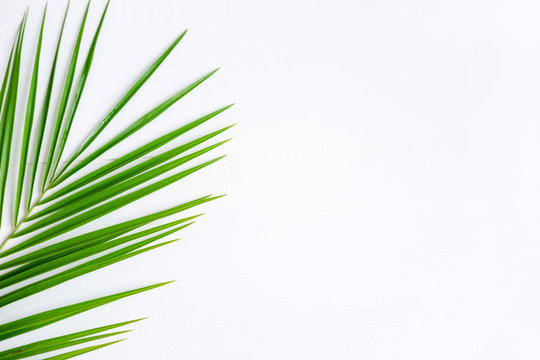 The basis for the banner with a palm leaf. Tropical banner design. Frame for text with leaf of palm tree on a wooden background