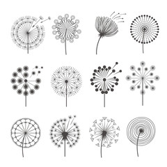 Dandelion icon. Botanical pictures flowers silhouettes herbal black pictures vector illustrations. Set of dandelion silhouette, flower summer