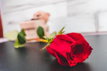 Oso con rosa aislada en fondo claro