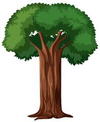 Isoated tree on white background