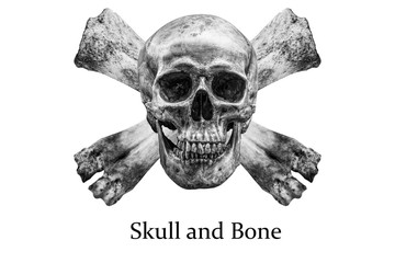 The skull and bone  isolated on white background / clipping path-image