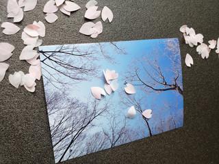 冬の写真と桜の花びら