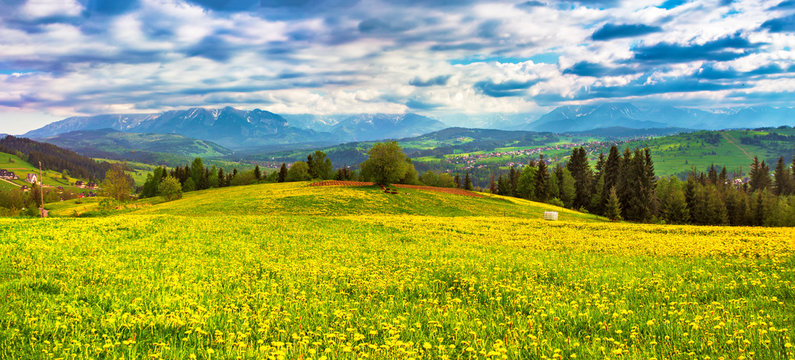 reen dandelion spring meadow. Tatra mountains panorama