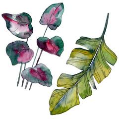 Green leaf. Exotic tropical hawaiian summer. Watercolor background illustration set. Isolated leaf illustration element.
