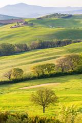 Trees in a Field on a rolling landscape
