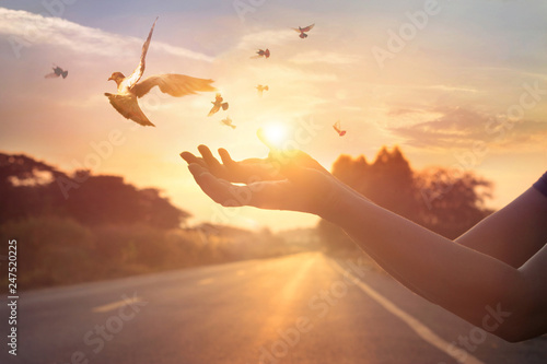 Leinwandbilder Woman praying and free bird enjoying nature on sunset background, hope concept, soft focus