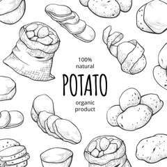 Potato drawing square banner, organic fresh food