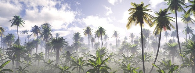 Morning in the jungle, Jungle in the fog, Panorama of the rainforest, palm trees in the fog, jungle in the haze,