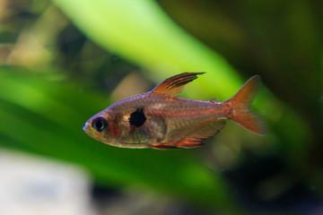 Macro photo of fish