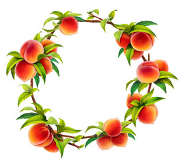 peach wreath, isolated on white