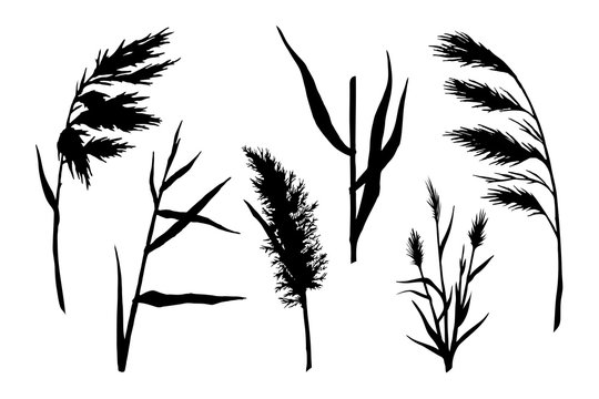 reed silhouette set