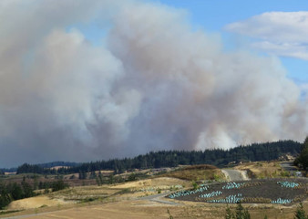 Smoke rises from a forest fire in Mahana