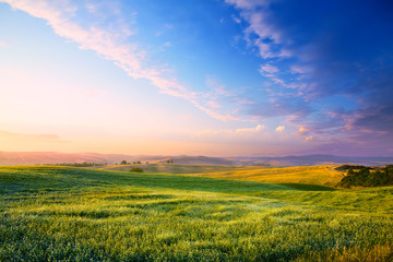 Panorama of a colourful sunset on a flowering green meadow