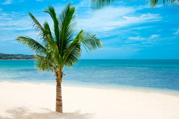 sea of beach caribbean sea