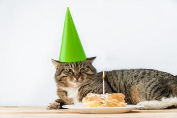 cat birthday cake candle. cake birthday.