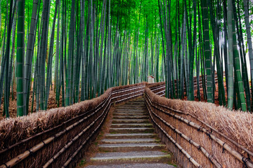 Photo sur Plexiglas Kyoto The Bamboo Forest of Arashiyama, Kyoto, Japan