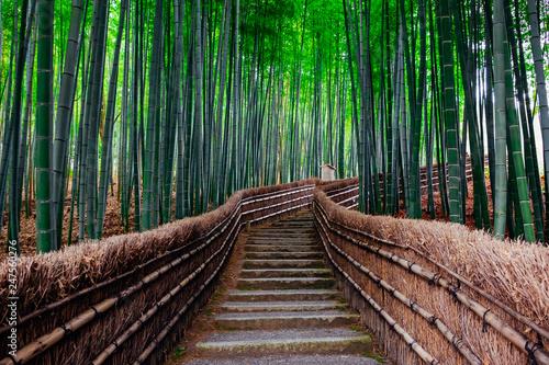 Wall mural The Bamboo Forest of Arashiyama, Kyoto, Japan