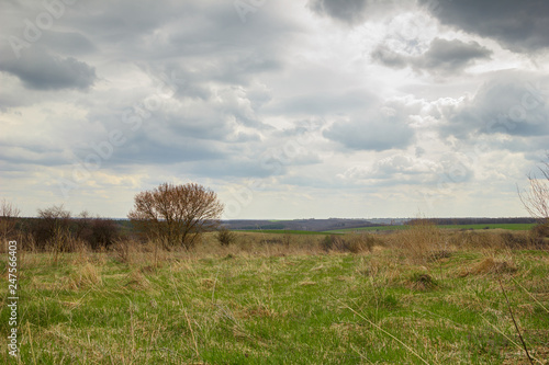 Fototapete rural landscape, green spring field grass with a sky and clouds