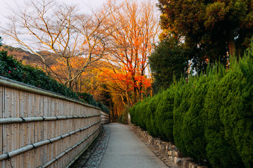 Fototapete - Pathway going to the Bamboo Forest of Arashiyama, Kyoto, Japan