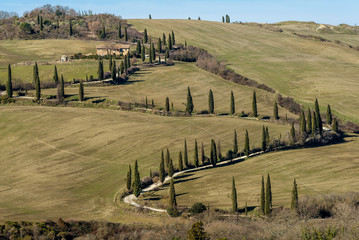 Typical rural landscape of the Tuscan countryside south of Siena, Italy, with cypresses bordering the dirt road