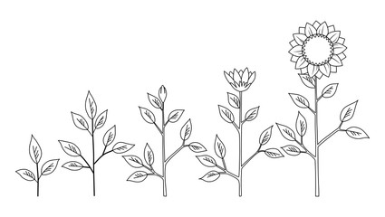 Vector sunflower plant growth stages coloring concept, abstract flower symbols isolated on white background. Sunflower life cycle. Flat style.