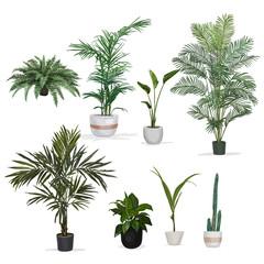 Obraz Hand drawn vector room plant - fototapety do salonu